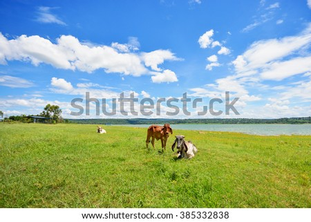 Central cow pasture