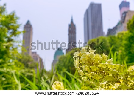 Central Park flowers Manhattan New York US - stock photo