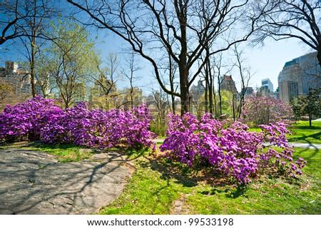 Central Park in Manhattan, New York City. USA. - stock photo