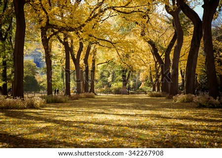 Central Park in New York City on colorful autumn day - stock photo