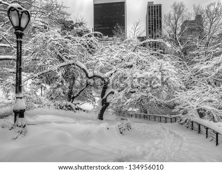 Central Park, New York City after snow storm