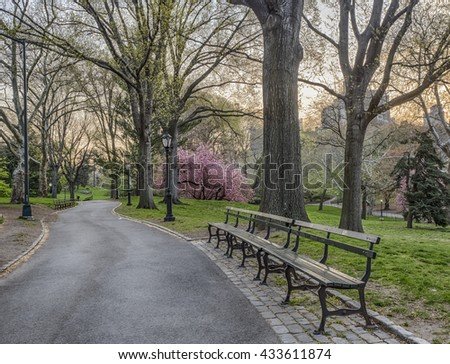 Central Park, New York City in early morning with Japanese Cherry trees in bloom - stock photo