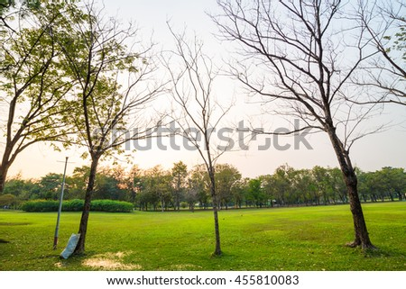 Central public park green grass meadow with tree sunset, sunny day in park