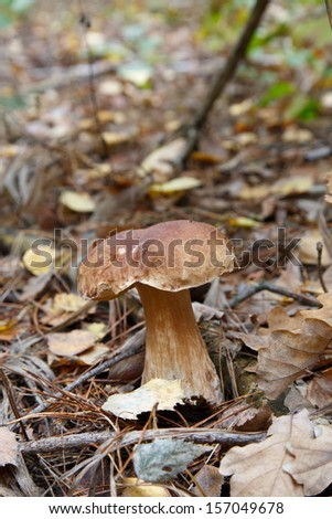 Cep mushroom among fallen leaves in autumn