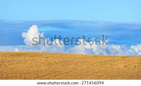 Cereal field against ornamental cloudscape - stock photo