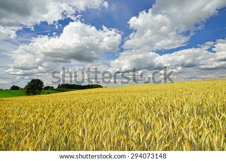 Cereal field on background sky with clouds. Country landscape. - stock photo