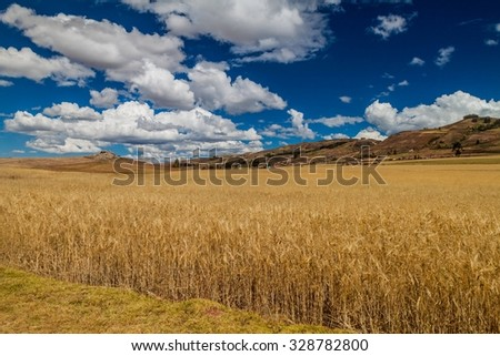 Cereal fields near Maras village, Sacred Valley, Peru - stock photo