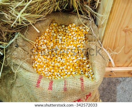 Cereal Grains and Seeds : Corn,  closeup on sack bag