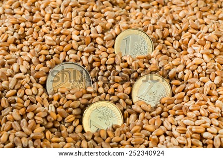 cereal grains of wheat. yields for crops in agriculture - stock photo