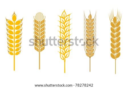 Cereal seeds and symbols isolated on white, such a logo. Vector version also available - stock photo