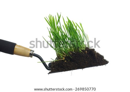 cereal with roots on metal spade isolated - stock photo
