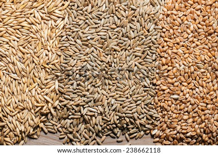 Cereals and wheat ears rye and oats on a wooden table