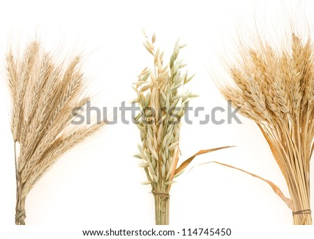 cereals ears isolated on white background - stock photo