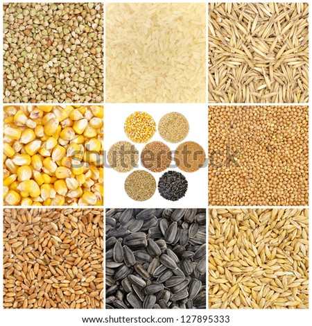 Cereals, seeds, grain crops - collection