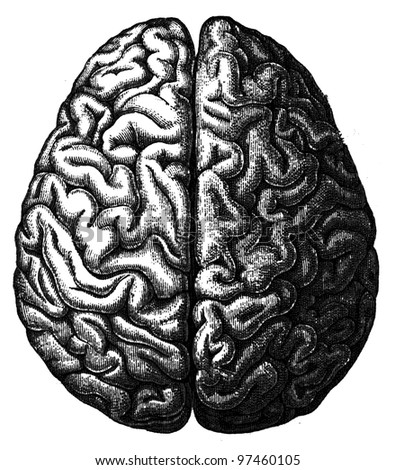 cerebrum - an illustration of the encyclopedia publishers Education, St. Petersburg, Russian Empire, 1896 - stock photo