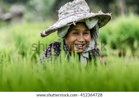 Chaimai,Thailand July 23 At country Village, Farmers are harvesting rice,on 23 July 2015. Background blur and soft focus. - stock photo