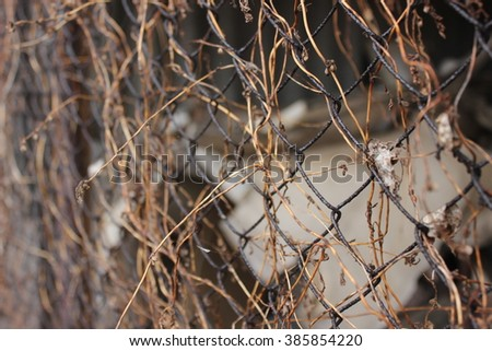 Chain-link fencing - stock photo