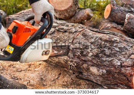 Chainsaw man sawing pine.