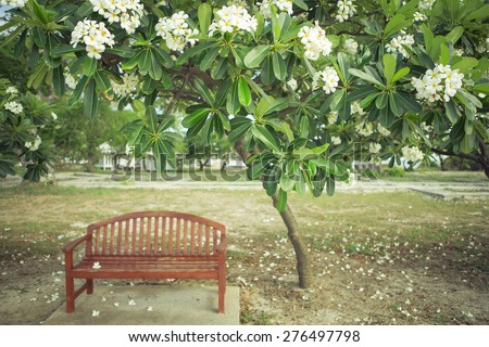 Chair with a tree in garden , vintage picture style - stock photo
