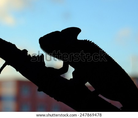 chameleon in the city - stock photo