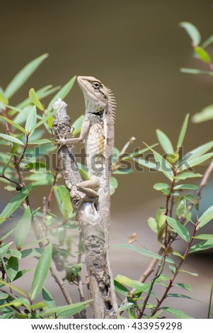 Chameleon perched on branches - stock photo