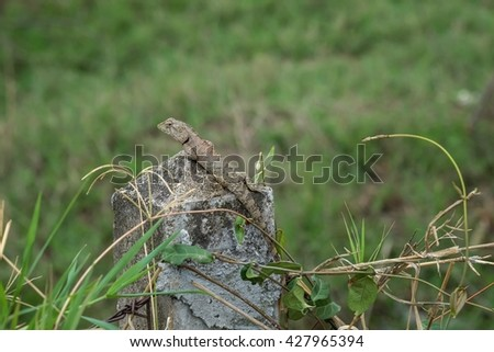 chameleon with nature background , chameleon in nature - stock photo