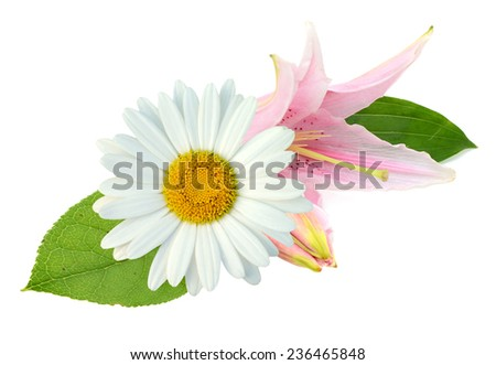 Chamomile and lily flowers - stock photo