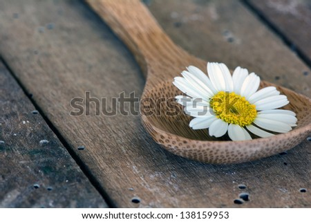 Chamomile (Asteraceae) flower in wooden spoon. Aromatherapy concept.