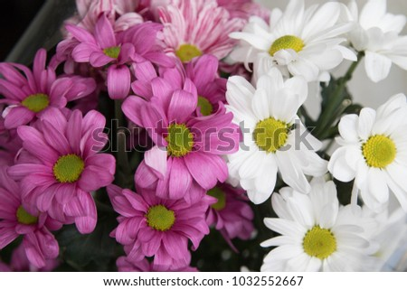 chamomile flower bouquet closeup
