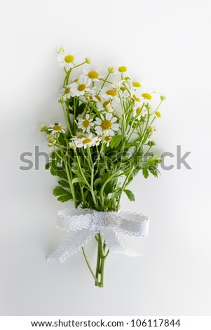 chamomile flower bouquet on white background - stock photo
