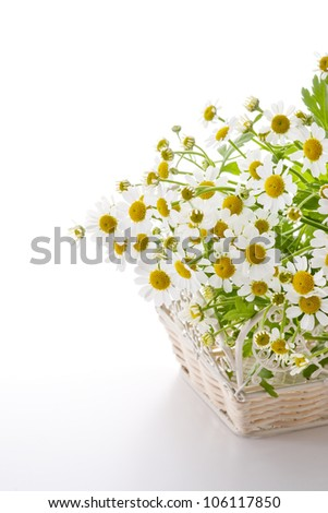 chamomile flower in basket on white background - stock photo