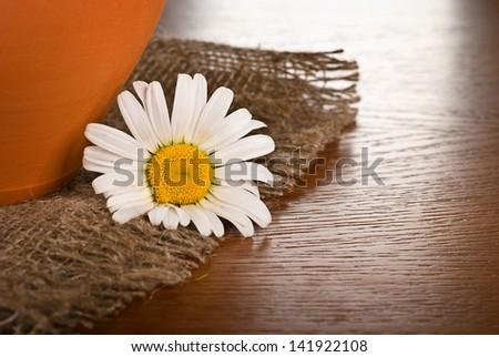 Chamomile flower on wooden background - stock photo