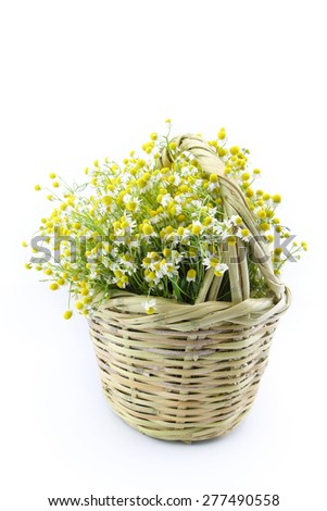Chamomile flowers in a wicker basket isolated on white background  - stock photo