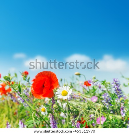 chamomile in field with wildflowers. soft focus - stock photo