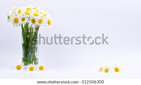 Chamomiles in a vase on a white background - stock photo