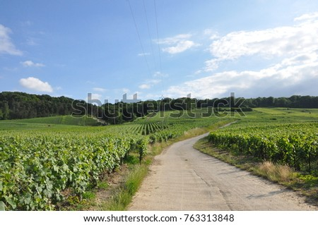 Champagne region with beautiful vineyards, France