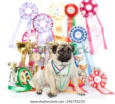 champion winning dog - stock photo