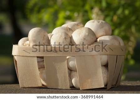 Championing mushrooms with white variety on wooden table in basket. - stock photo