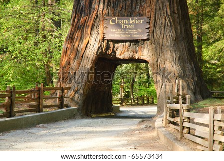 Redwood Tree Stock Images, Royalty-Free Images & Vectors ...