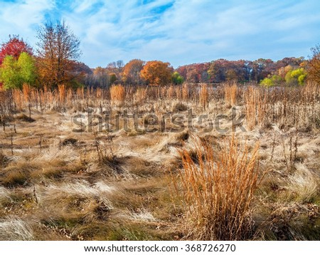 Changing Fall colors in this meadow in Central New Jersey, - stock photo