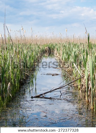 channel through reeds in neajlov small delta comana - stock photo