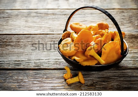 chanterelle mushrooms on a dark wood background. tinting. selective focus on the middle  mushroom - stock photo