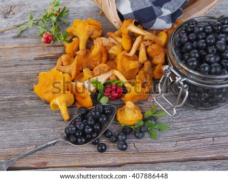 Chanterelles in a basket with blueberries beside