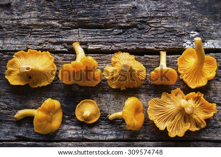 Chanterelles in a row on the wooden background - stock photo