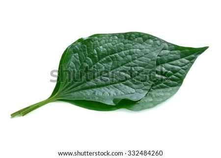 Chaplo/ green leaf isolated on white background. - stock photo