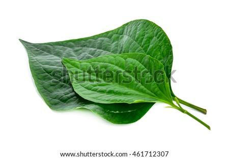 Chaplo/ green leaf isolated on white background.