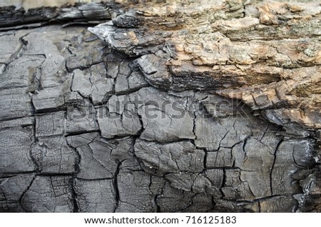charcoal, charred tree, close-up, texture, background