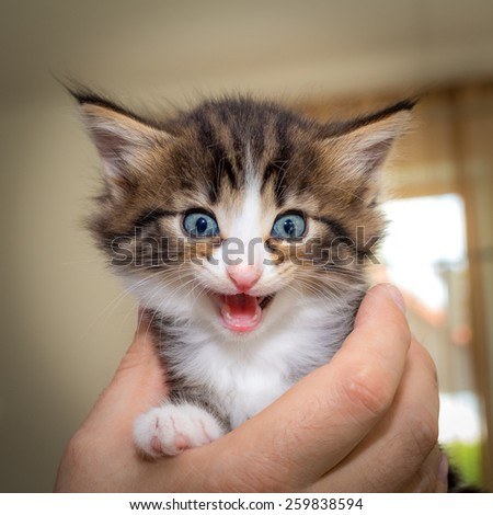 Charming kitten on a man's hands - stock photo