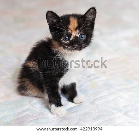 Charming little kitten sitting on a bed - stock photo
