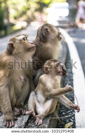 Monkey Cub Cleans Teeth On Stone Stock Photo 604719557 - Shutterstock